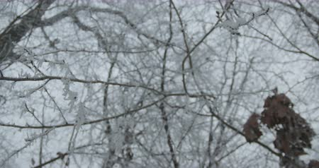 faház : View of a winter snowed tree twig.