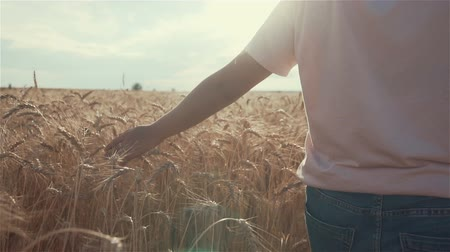 Close-up of womans hand running through organic wheat field, steadicam shot. Slow motion. Sun lens flare. Girls hand touching wheat ears closeup.