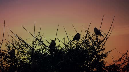 birds flying : Sparrows on a branch during sunset.