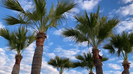 突入 : Palm tree moving cloud time lapse passing speeding overhead concept travel fast time 動画素材