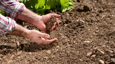 toprak : Farmer checking soil quality in hands on a fertile cultivated farm land