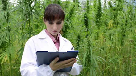 конопля : Female scientist holding a clipboard and checking hemp plants, leaves and flowers in the field, herbal medicine concept