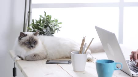 pisi : Happy cat owner working at home