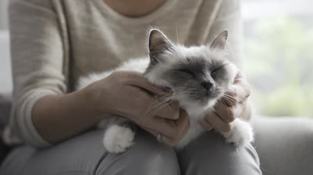 acariciando : Woman cuddling a beautiful cat on her lap, pets and lifestyle concept Vídeos