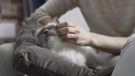 дружелюбный : Woman caressing and cuddling her beautiful cat lying on a soft cushion, pets and lifestyle concept Стоковые видеозаписи