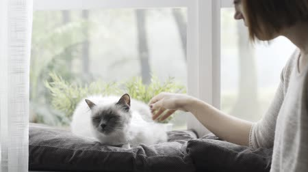 pussy : Woman petting her beautiful cat at home, pets and lifestyle concept