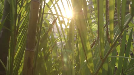 takamaka : Sun pass through the palm Stock Footage