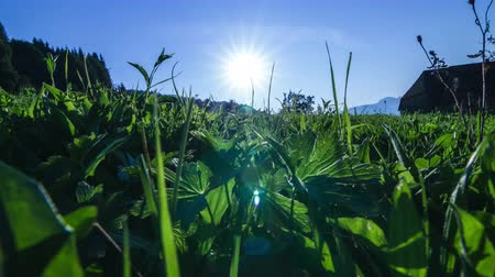 uncultivated field : Time lapse of the sun rising over a quiet summer field with blue sky