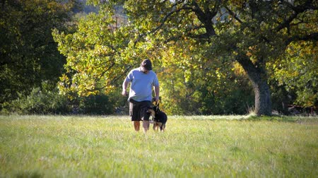 pásztor : Young german shepherd and trainer walking in the field front medium