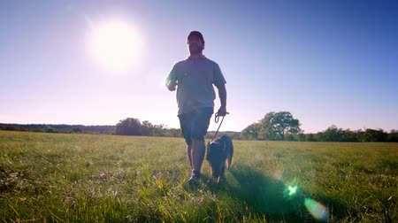 almanca : Young german shepherd and trainer walking in the field front steadicam