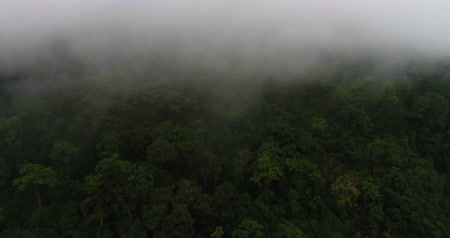 enevoado : Aerial view of beautiful green hills mountains forest surrounded by clouds