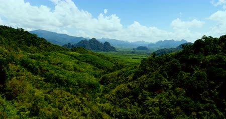 panorâmico : Aerial view of tropical green rain forest landscape in Thailand during sunny summer day