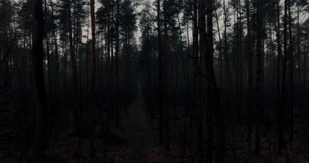 ascend : Aerial drone view throughout dark mysterious forest