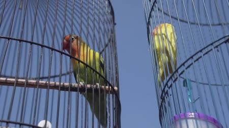 jailed : Video of parrot birds over blue sky background during summer sunny day - video in slow motion