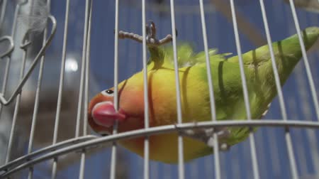 jailed : Video of parrot bird over blue sky background during summer sunny day - video in slow motion