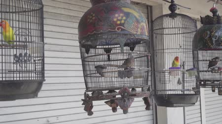 jailed : Hanging cages with birds on traditional Asian pet market