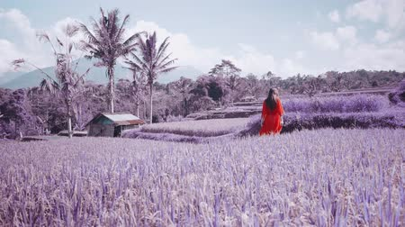 znicz : Purple or violet colored footage of beautiful young woman in red transparent dress walking along the rice field - video in slow motion