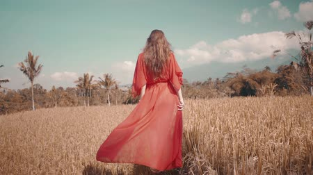 znicz : Back view of beautiful young woman in red transparent dress walking along the rice field - video in slow motion