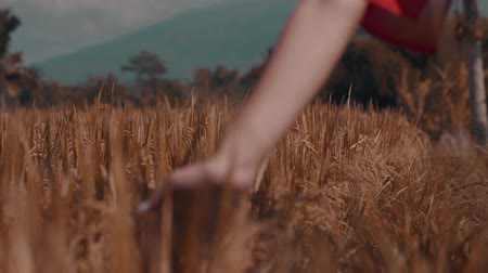 znicz : Closeup womans hand touching grass in rice fields - video in slow motion Wideo