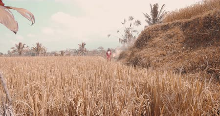znicz : Beautiful young woman in red transparent dress dancing with colored smoke in rice field - video in slow motion Wideo
