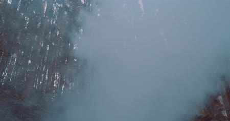 znicz : Beautiful brunette woman walking in hazy tropical mountain forest - video in slow motion Wideo