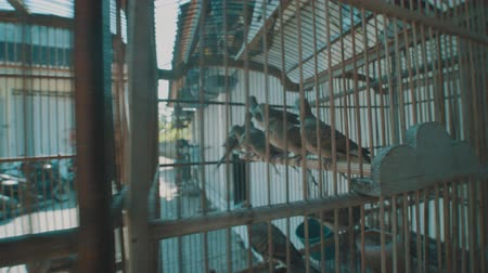 jailed : Video of dove birds in the cage on the traditional market in Bali, Indonesia