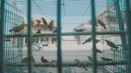 jailed : Video of small birds in the cage on the traditional market in Bali, Indonesia Stock Footage