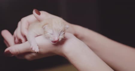 слепой : Closeup of womans hands holding cute ginger baby kitten Стоковые видеозаписи