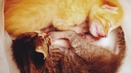 bichano : Closeup of two adorable newborn kittens sleeping Stock Footage