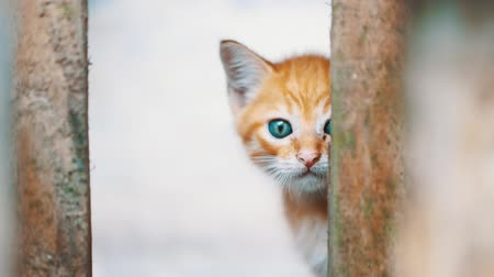 hapis : Small adorable kitten with blue eyes looking behind the bars