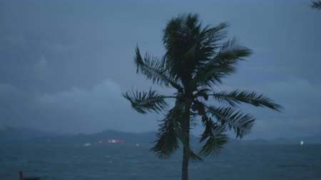 restless : Coconut palm tree in the wind over dark cloudy sky and sea background. Cinematic dramatic footage of palm tree before rain Stock Footage