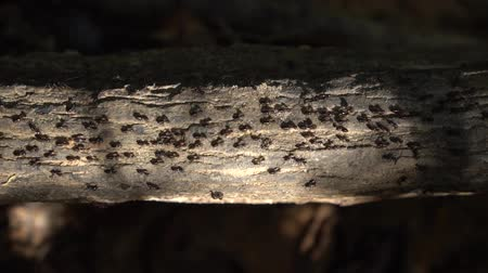 terrestre : Closeup of many terrestrial termites on the tree branch