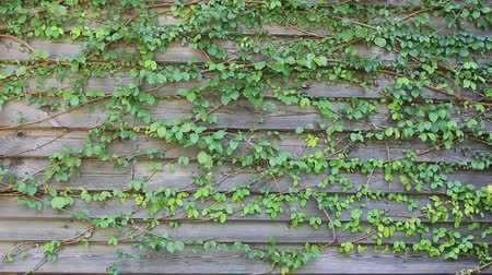 hera : Wind blowing leaves vertical wall