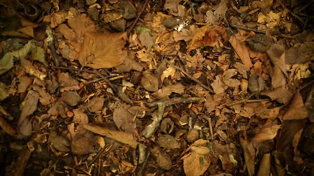 gerekçesiyle : Panning over a forest floor with dried leaves and twigs on an autumn day