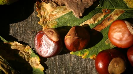 dřeň : Macro panning over conkers and leaves from a Horse Chestnut tree Dostupné videozáznamy
