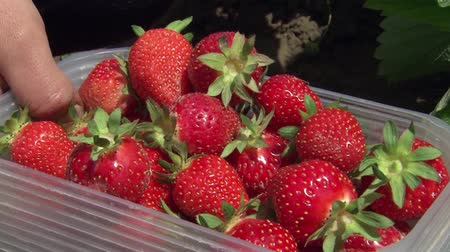 vitaminic : Hand Picked Strawberries