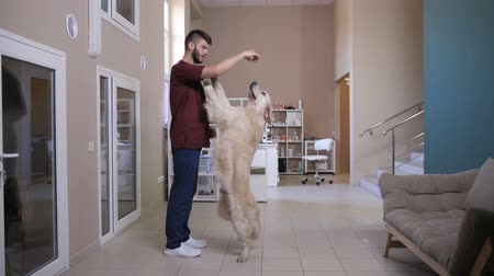 Vet training dog to stand on hind legs Stock Footage