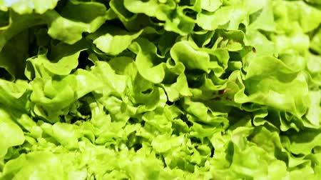 супермаркет : Top view on butterhead lettuce in a supermarket Стоковые видеозаписи