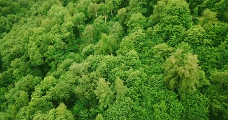 pireneusok : Cinematic view of trees in a forest from above (4k)