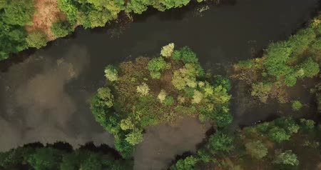 salamura : Spiraling aerial view of a lake in the woods at Asberg forest in Germany (4k) Stok Video