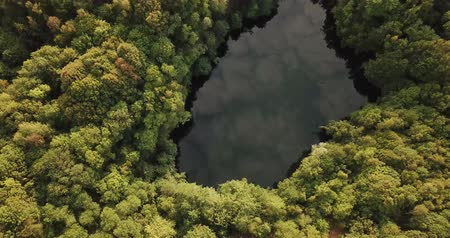 salamura : Forest lake in Asberg, Germany during summer time, seen from above (4k) Stok Video