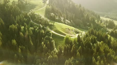 tracking : Aerial view shot of mountain forest landscape with hiking path in Rh?ne-Alpes region of France (HD)