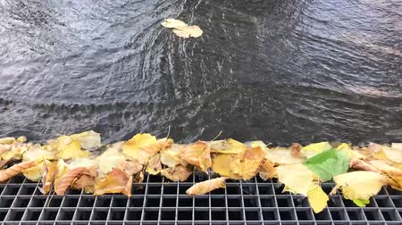 Gutter catching leaves from flowing rainwater in a city (Full HD)
