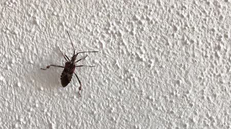 Small bug crawling up on white wall (Full HD)
