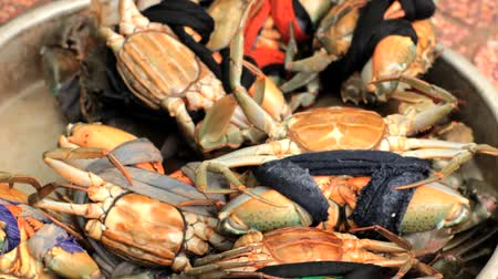 crustáceo : Alive crabs for sale at fish market, Vietnam, Hochiminh city.