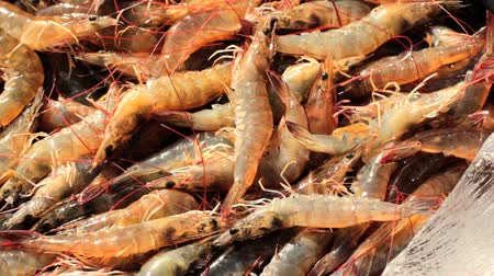 krewetki : Alive shrimps at fish market, Vietnam, Hochiminh city. Wideo