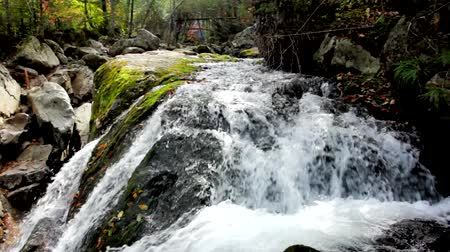 mossy forest : Pure fresh water waterfall in autumn forest Stock Footage