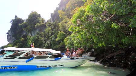 sea monkeys : PHI PHI DON ISLAND, THAILAND - CIRCA DECEMBER: tourists feed monkeys from speedboat, on circa December, 2013 in Phi Phi Don island, Thailand. Stock Footage