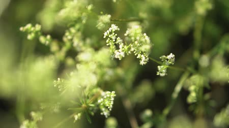 Beautiful pastel background for your video. Weeds on an overgrown spring field. summer stock theme