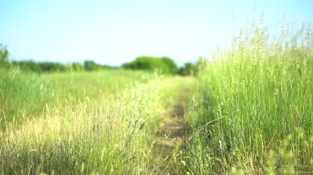 Beautiful lush green grass in the field. Countryside and farm theme. Stock video back